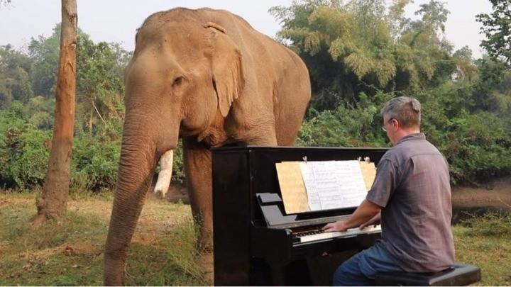 Ο Paul Barton παίζει πιάνο σε ελέφαντες