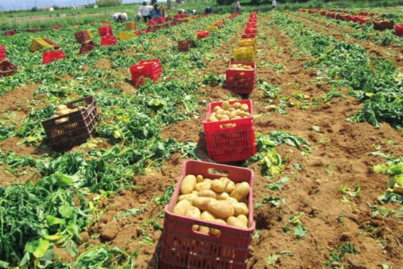Ε.Ε.: «Ναι» στο ελληνικό πρόγραμμα ενίσχυσης αγροτών
