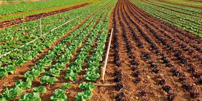 Τα μέτρα του ΥΠΑΑΤ για τη μείωση του κόστους παραγωγής