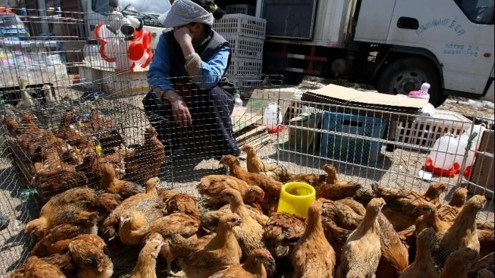 Πρώτο κρούσμα της γρίπης των πτηνών σε άνθρωπο