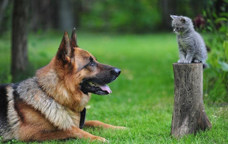Συχνά σκύλοι και γάτες κολλάνε Covid-19 από τους ιδιοκτήτες