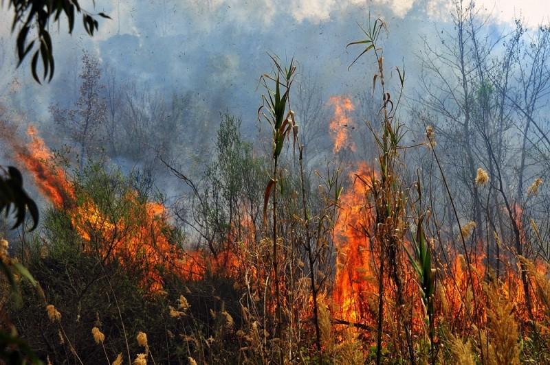 Πυρκαγιά στη Χίο - Εκκενώθηκε ο οικισμός Κατάβαση