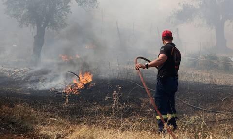 Λαμία: Δύο πυρκαγιές στη Φθιώτιδα