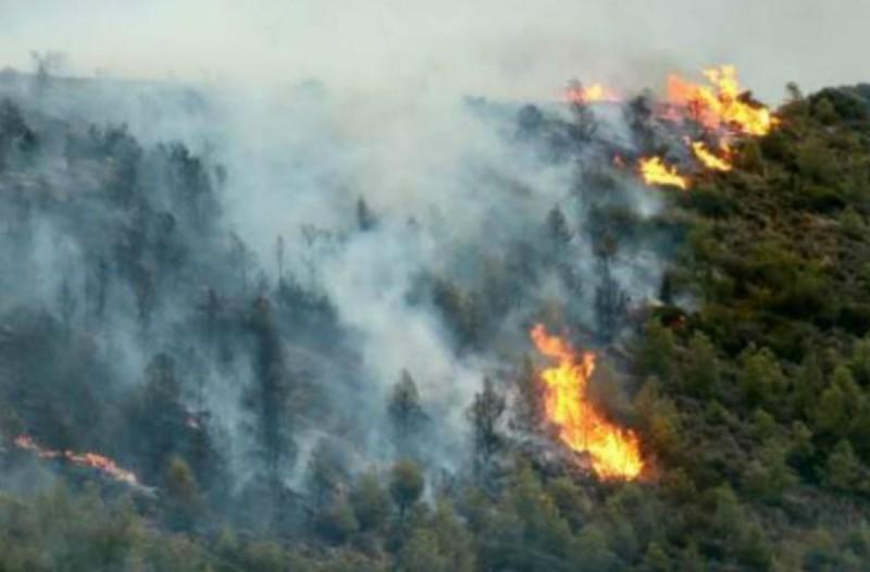 Νέα φωτιά στην περιοχή Μιράκα του δήμου Αρχαίας Ολυμπίας