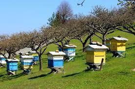 Μεγάλο πλήγμα στη μελισσοκομία από τις πυρκαγιές στην Εύβοια