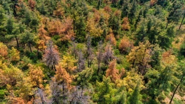 Σχεδόν το 1/3 είδη δέντρων της Γης κινδυνεύουν με εξαφάνιση